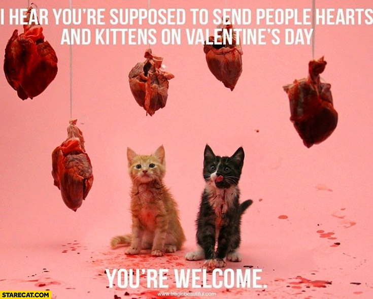 I hear you're supposed to send people hearts and kittens on Valentine's day. You're welcome