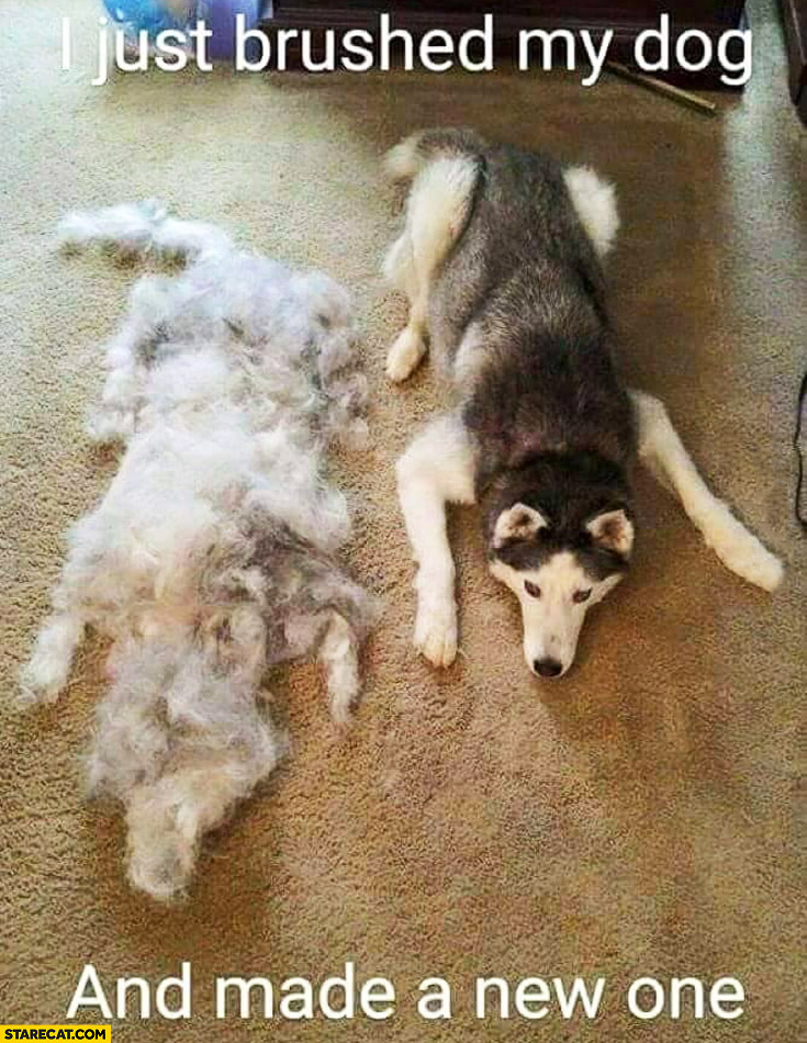 I just brushed my dog and made a new one