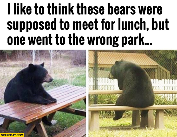 I like to think these bears were supposed to meet for lunch but one went to the wrong park. Sitting alone at the table