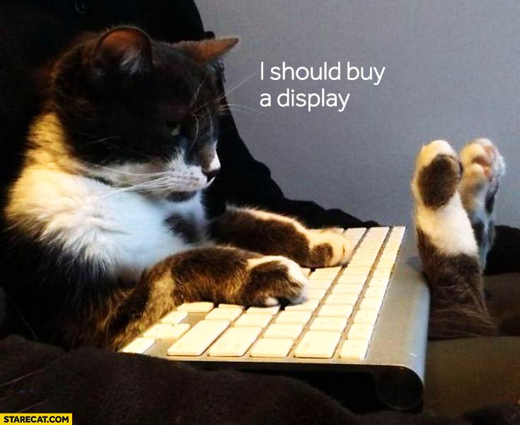 I should buy a display cat