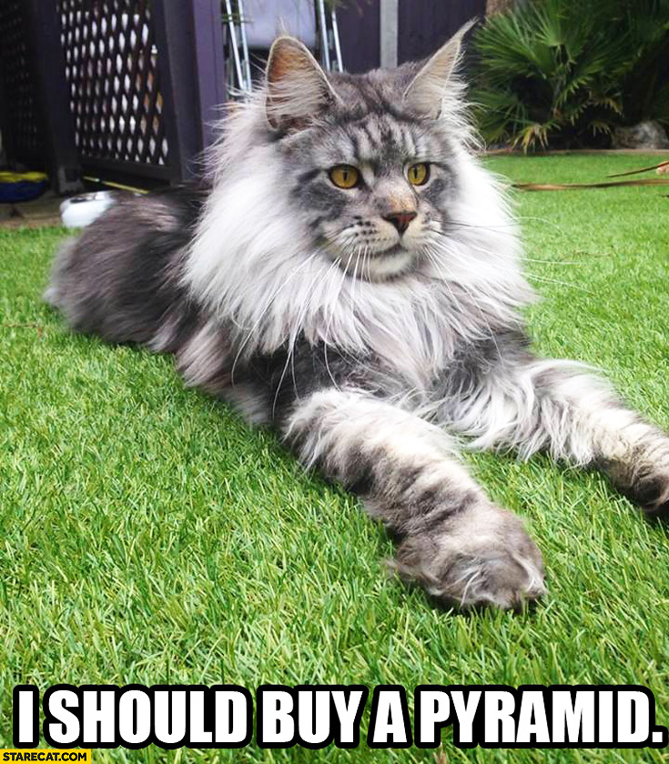 I should buy a pyramid cat Sphinx