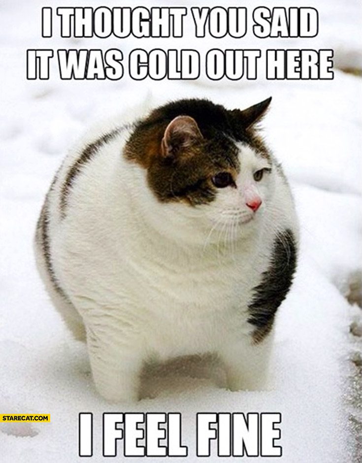I thought you said it was cold out here I feel fine fat cat