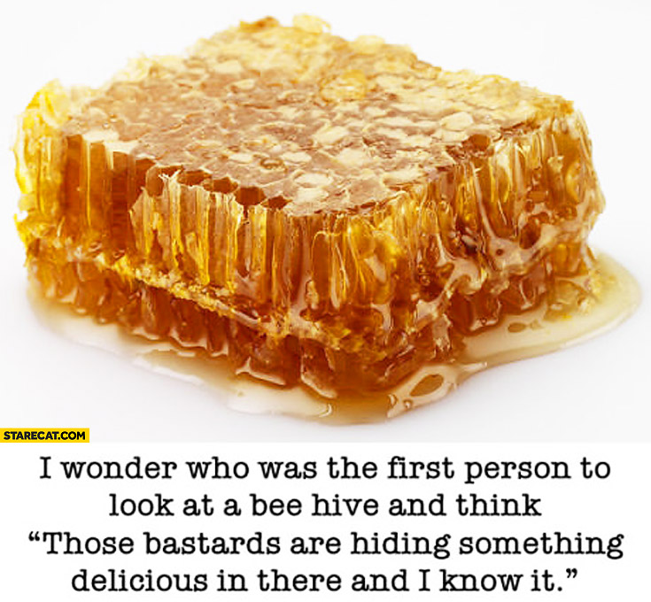 I wonder who was the first person to look at a bee hive and think those bastards are hiding something delicious in there and I know it honey