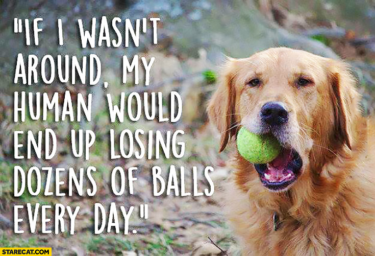 If I wasn't around my human would end up losing dozen of balls every day dog quote