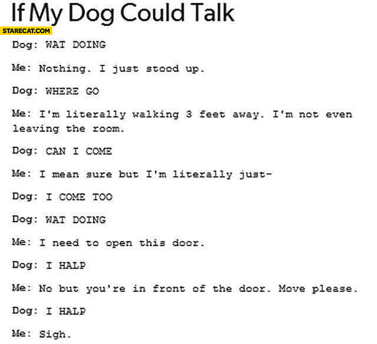 If my dog could talk: Wat doing? Where go? Can I come?