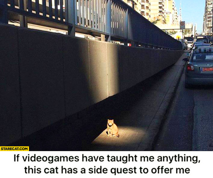 If videogames have tought me anything this cat has a side quest to offer me