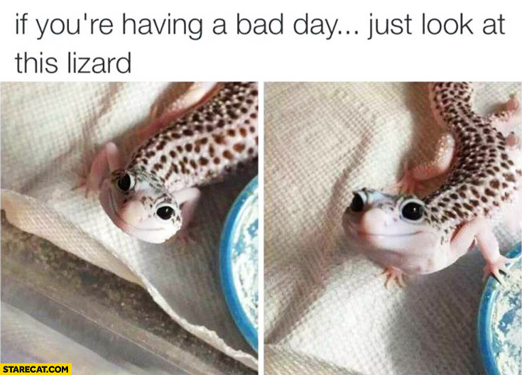If you're having a bad day just look at this cute lizard
