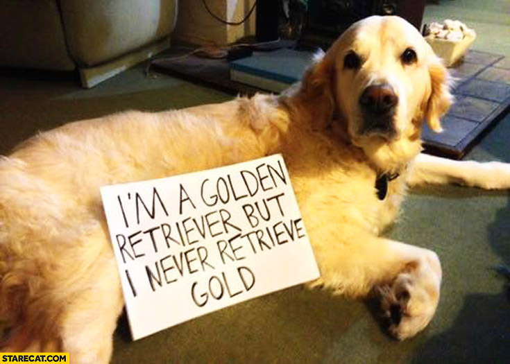 I'm a Golden Retriever but I never retrieve gold dog
