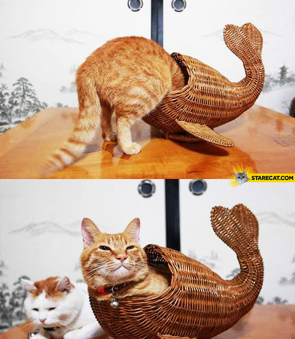 I'm a tiny whale cat