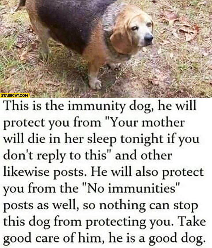 Immunity dog he will protect you from your mother will die and other likewise posts