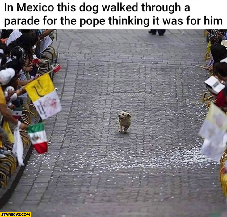 In Mexico this dog walked through a parade for the pope thinking it was for him