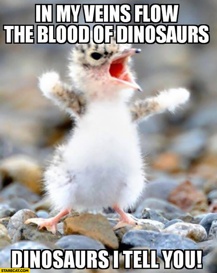 In my veins flow the blood of dinosaurs I tell you cute tiny bird