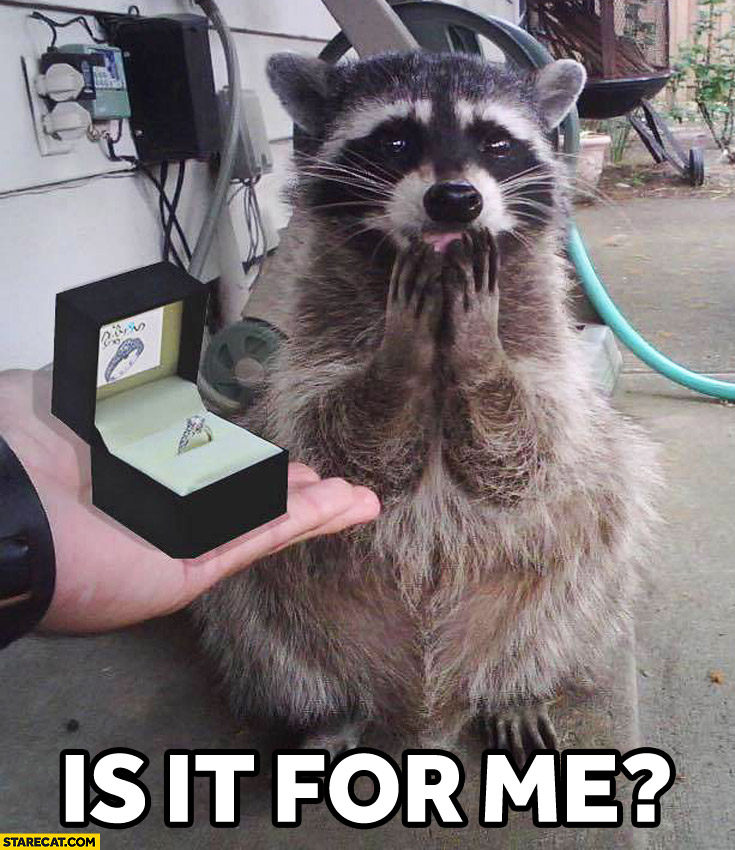 Is it for me? Racoon wedding ring