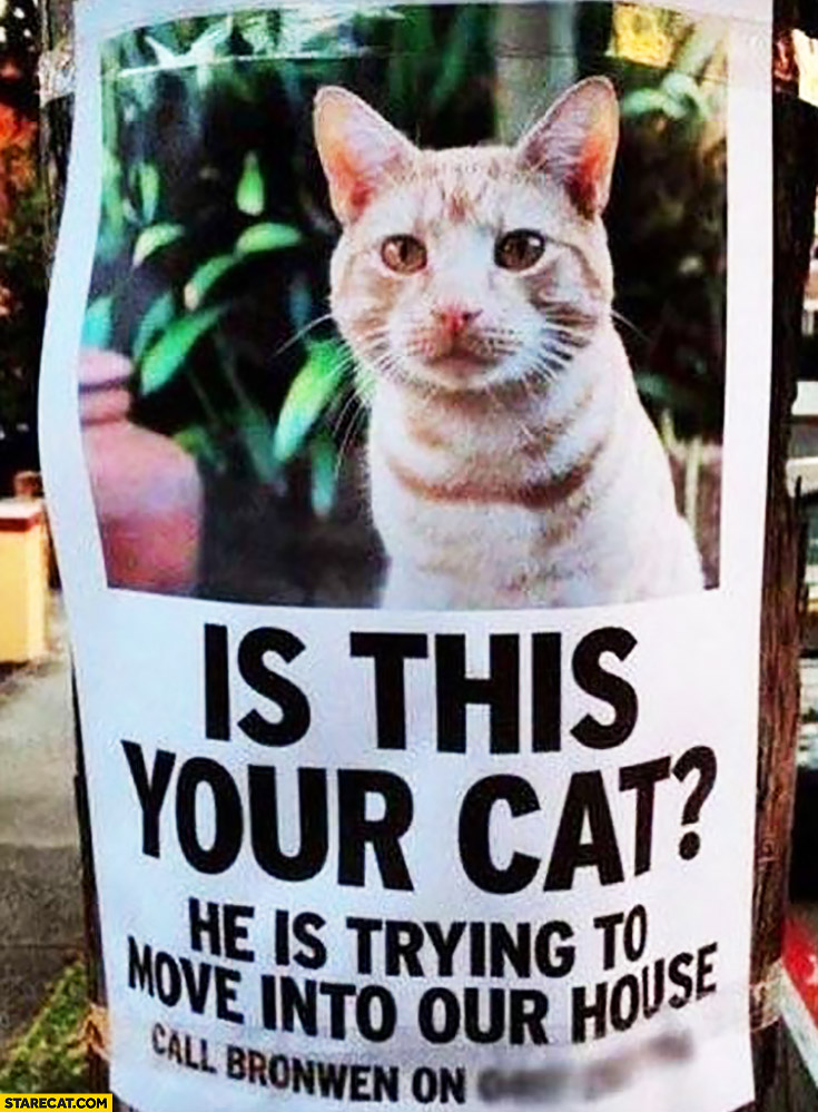 Is this your cat? He is trying to move into our house poster
