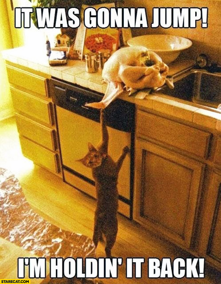 It was gonna jump I'm holding it back cat Turkey on a counter