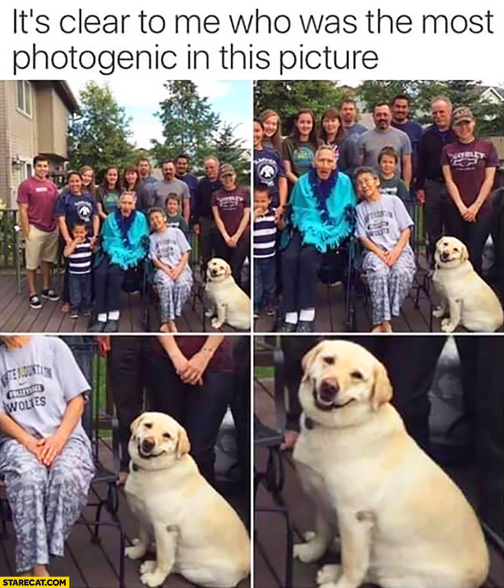 It's clear to me who was the most photogenic in this picture dog family picture