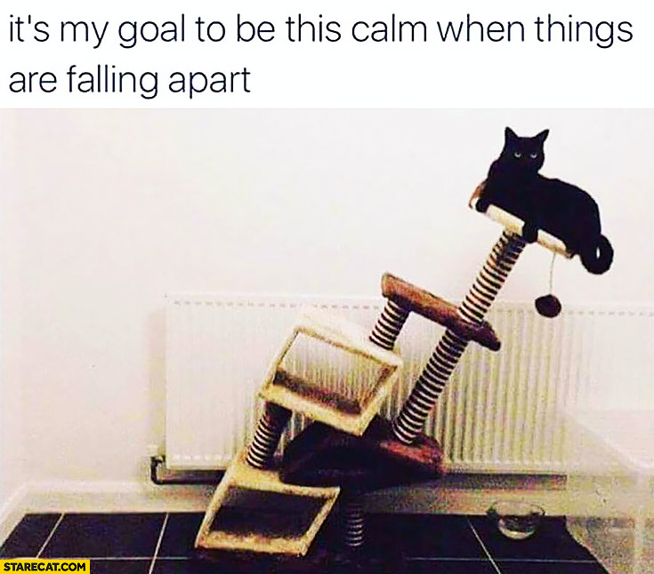 It's my goal to be this calm when things are falling apart. Cat on a crooked bed