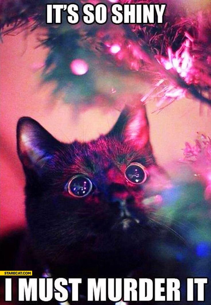 It's so shiny I must murder it cat