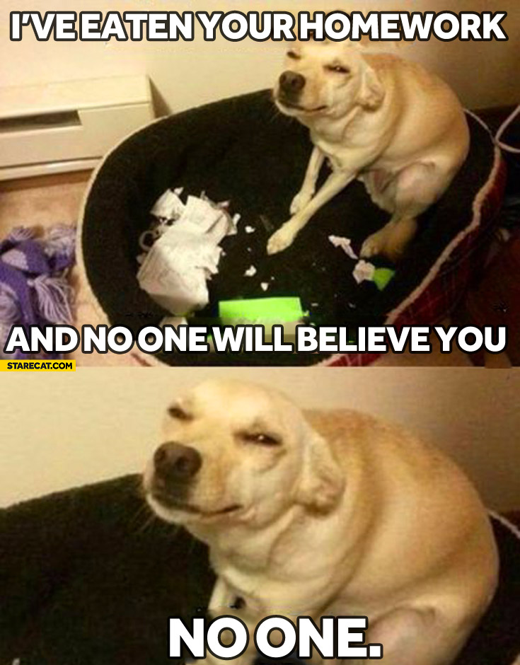 I've eaten your homework and no one will believe you dog