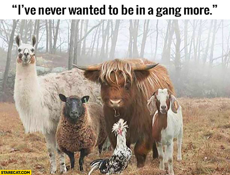 I've never wanted to be in a gang more animals
