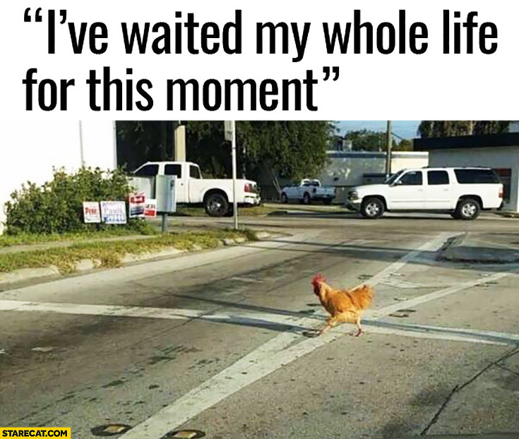 I've waited my whole life for this moment chicken crossing road