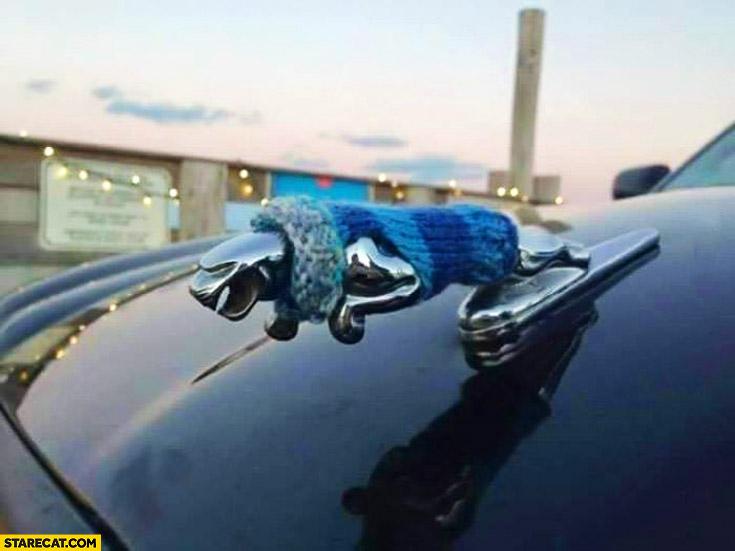 Jaguar car emblem in a sweater cold weather