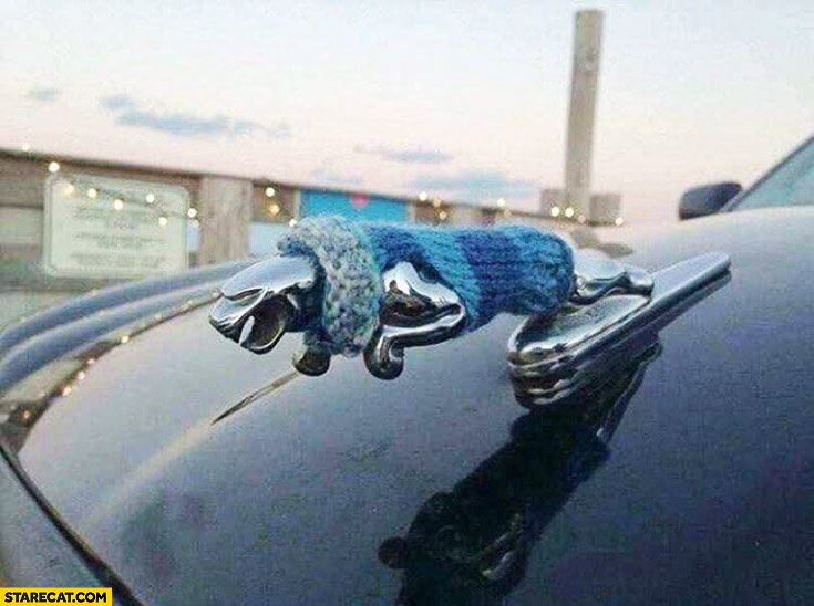 Jaguar car logo dressed in a warm sweater