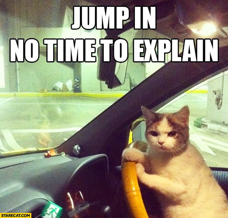 Jump in not time to explain driving cat