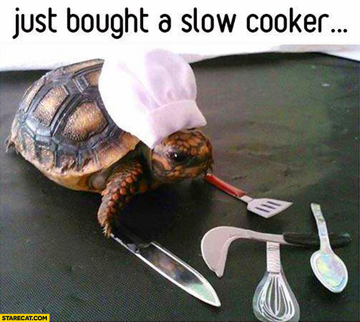 Just Bought A Slow Cooker Turtle Chef  StareCatcom