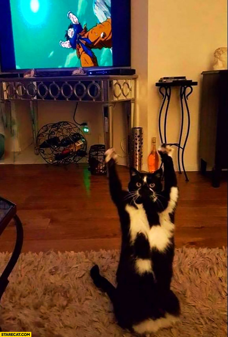 Kamehameha cat watching Dragon Ball