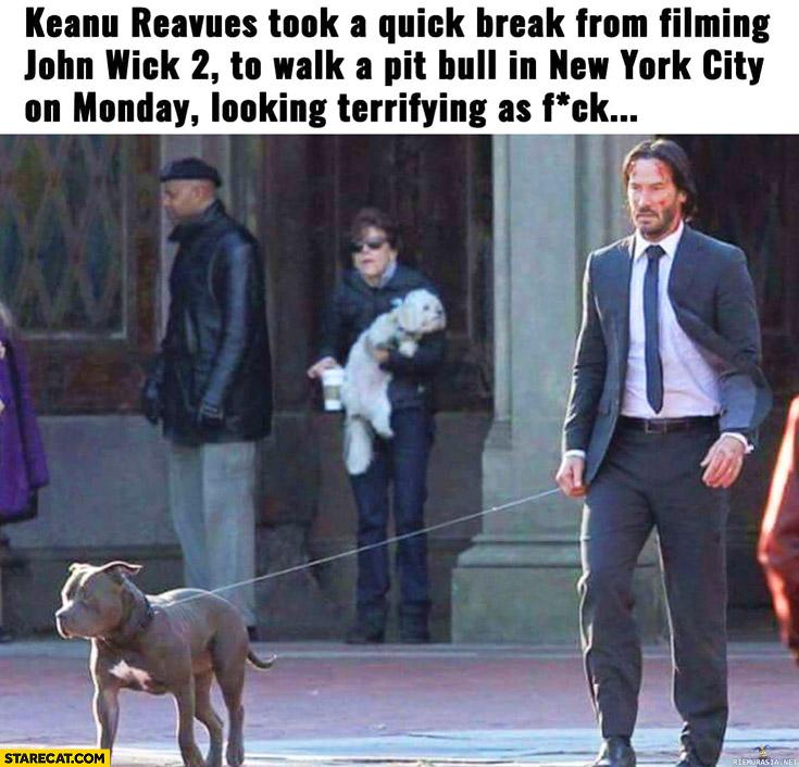 Keanu Reeves took break from filming to walk a pitbull in New York looking terrifying