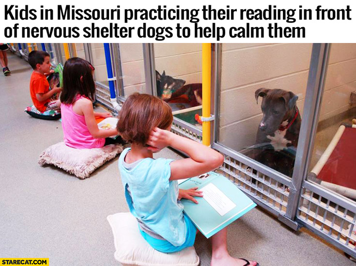Kids in Missouri practicing their reading in front of nervous shelter dogs to help calm them