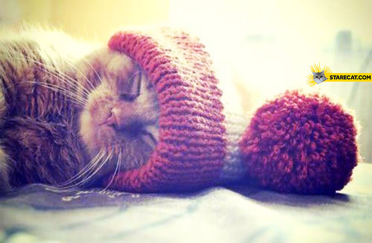 Kitty in a beanie
