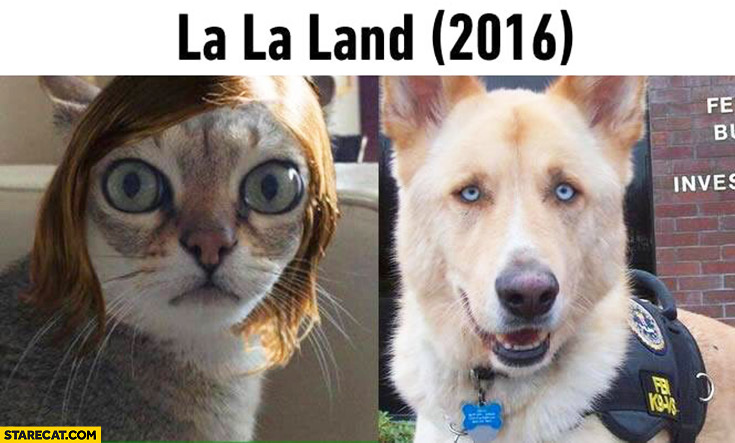La La Land movie cat dog looking like main characters Emma Stone Ryan Gosling