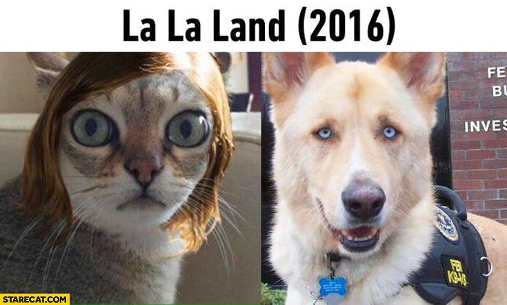 Lala Land Cat And Dog Meme