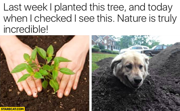 Last week I planted this tree and today when I checked I see this. Nature is truly incredible dog's head