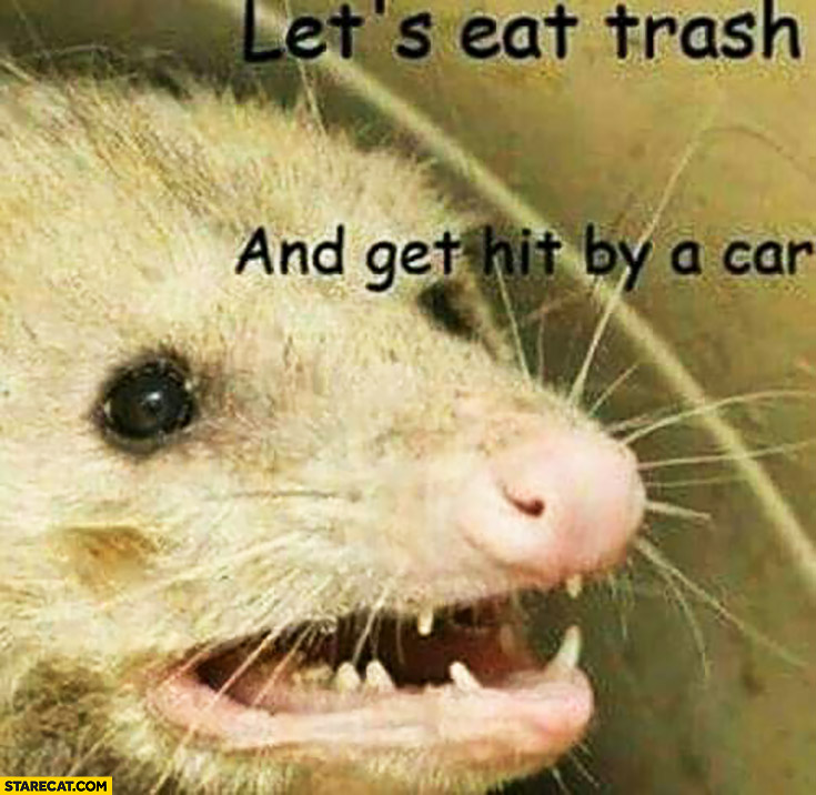 Let's eat trash and get hit by a car rat meme
