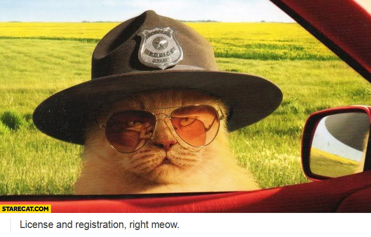 License and registration right meow police cat