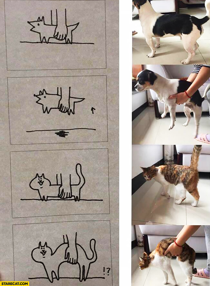 Lifting a dog compared to lifting a cat
