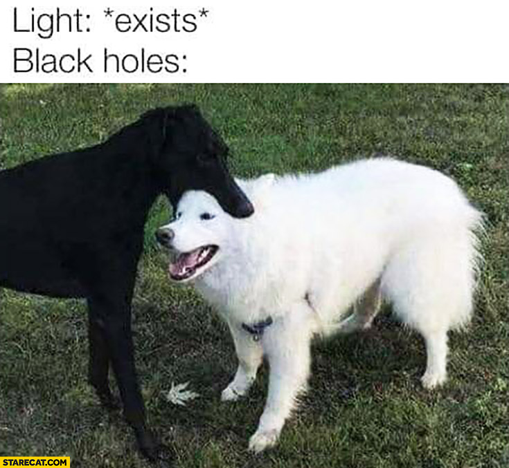 Light *exists* black holes capture it dog holding biting other dogs head