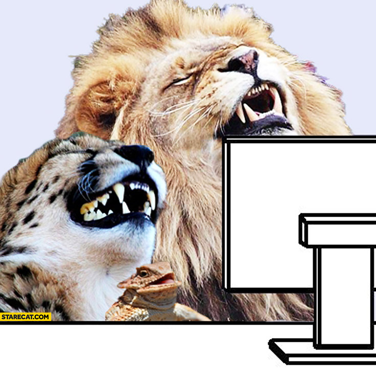Lion cheetah meme laughing in front of computer screen