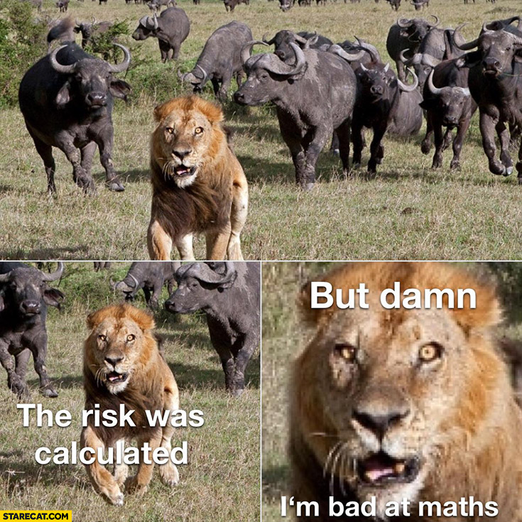 Lion running away the risk was calculated but damn I'm bad at maths
