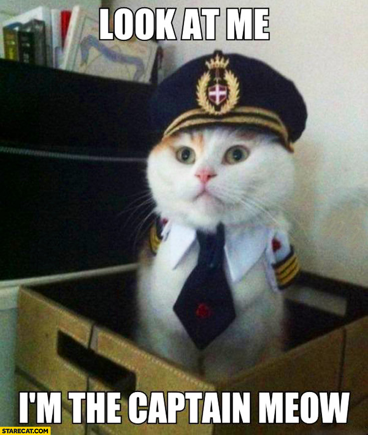 Look at me I'm the captain meow
