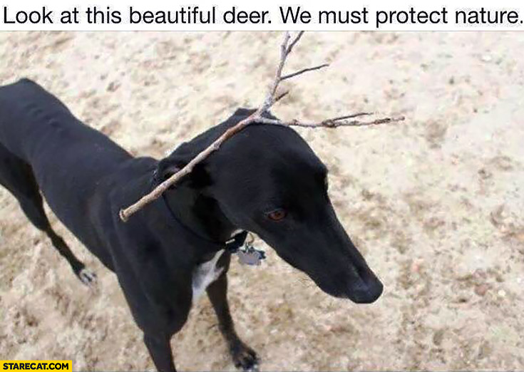 Look at this beautiful deer, we must protect nature. Dog with a stick on his head