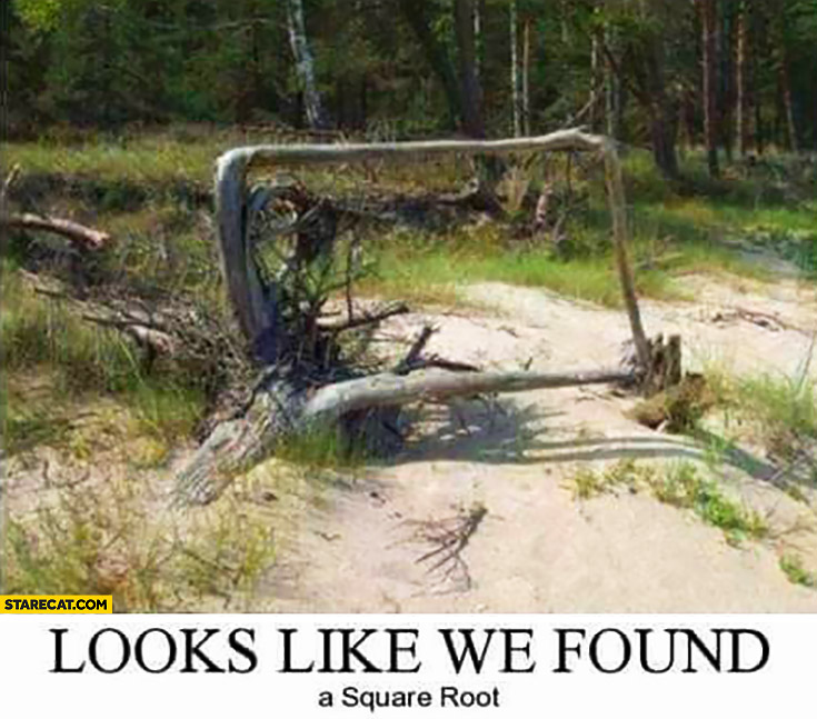 Looks like we found a square root wood tree forrest