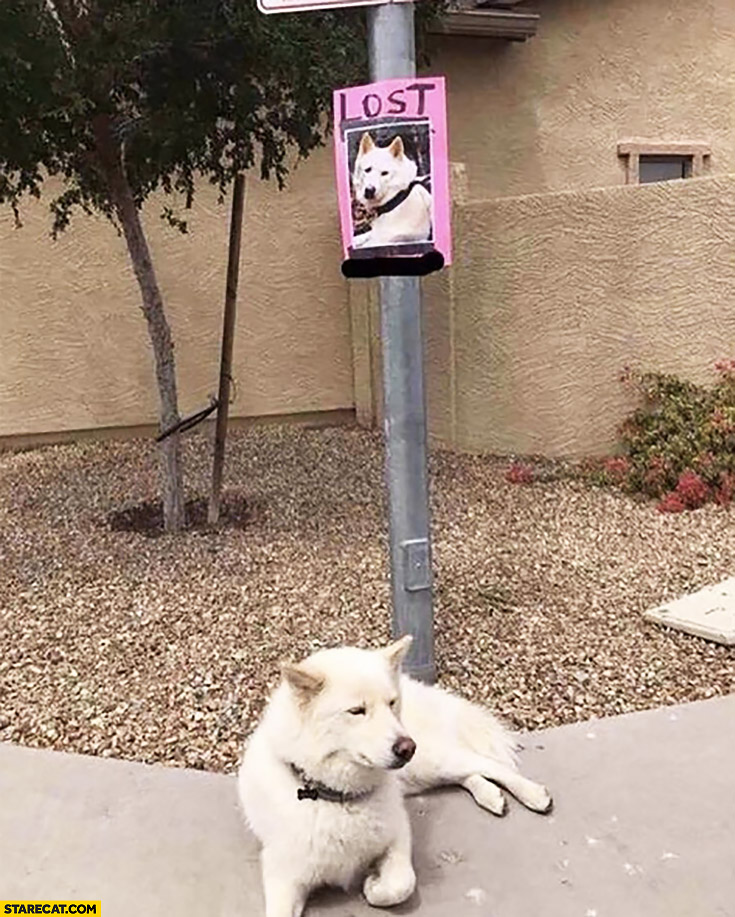 Lost dog resting under the sign