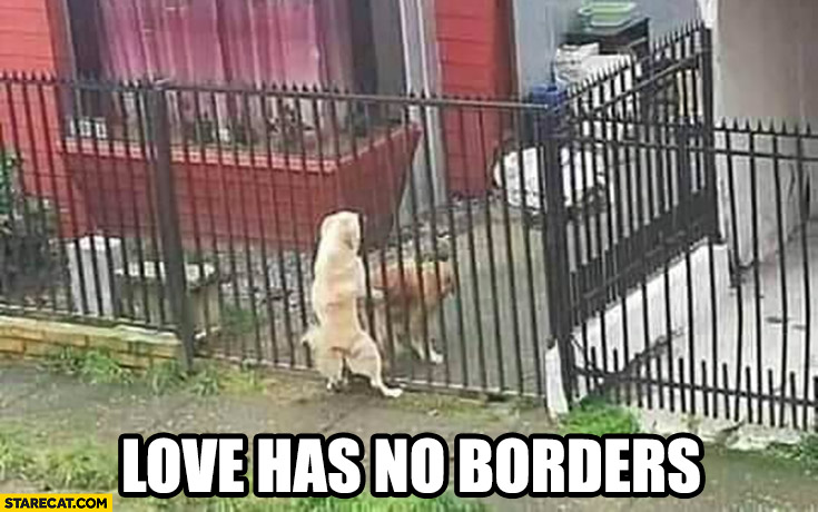 Love has no borders dogs doing it through a fence