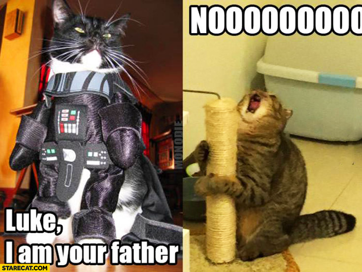 Luke I'm your father nooo cats