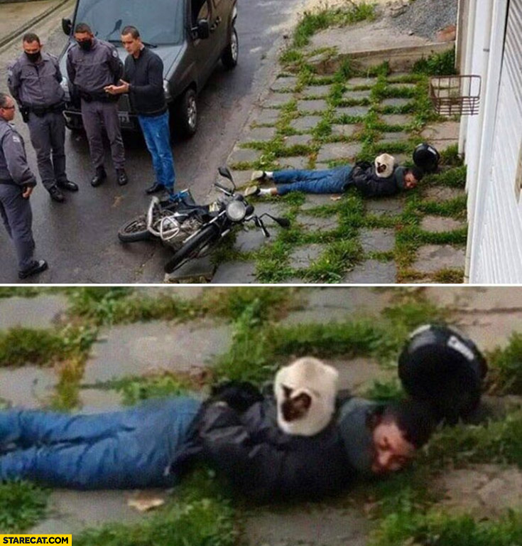 Man arrested by the police cat sitting on him