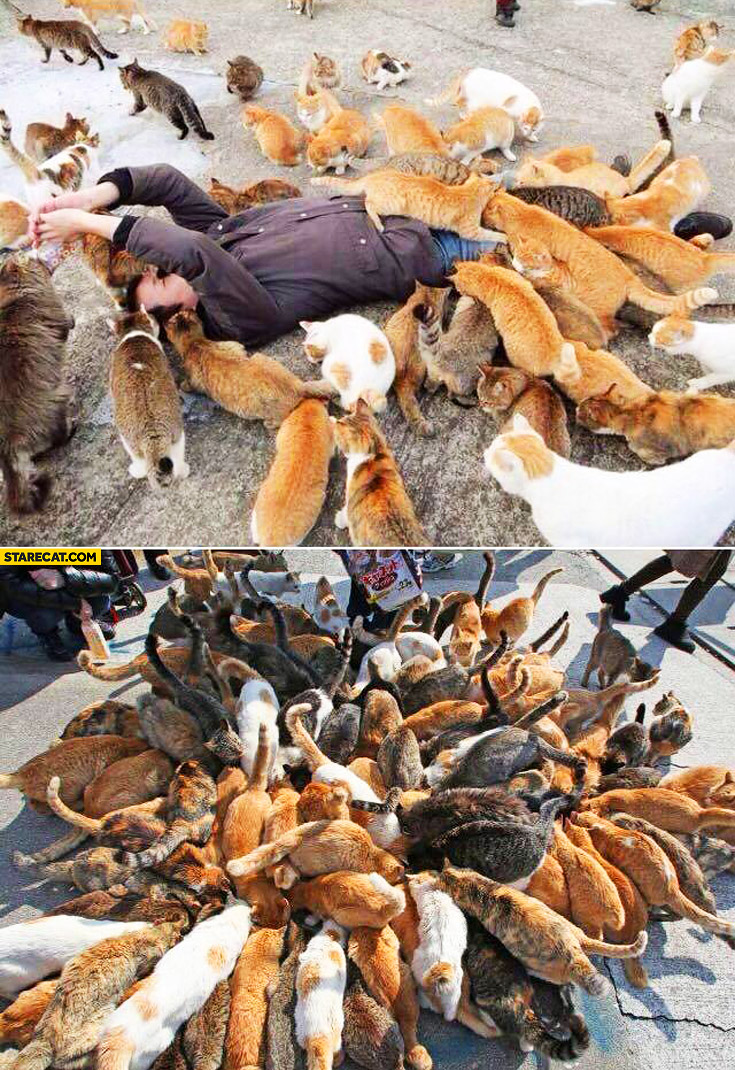 Man drowning in cats